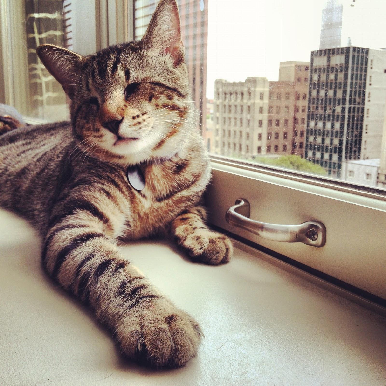 Слепой кот Оскар