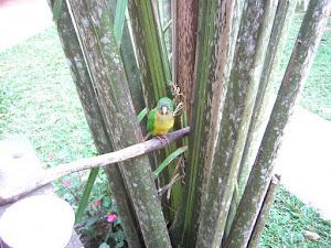 Lindinho!!!! Olha o papagaio!!!