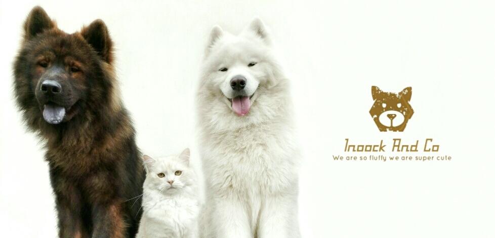 Inoock And Co