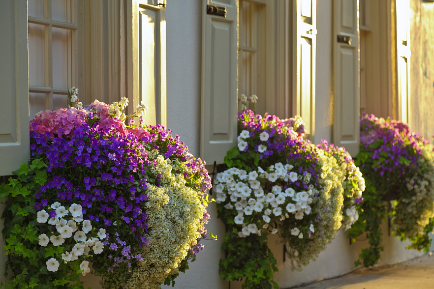 Flower Window Baskets : Who plants a seed window boxes