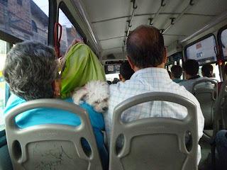 Perro en transporte público