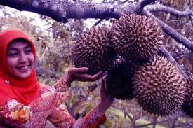 manfaat durian untuk obat kecantikan