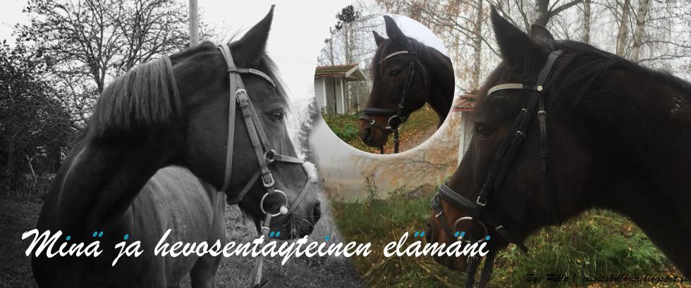 Minä ja hevostäyteinen elämäni