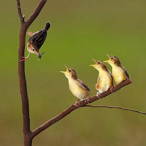 Bird With Kids