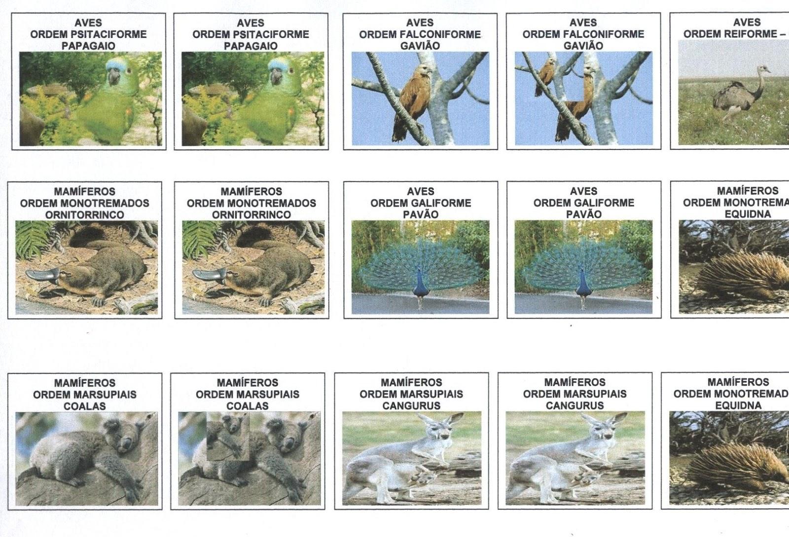 Download free software revista brasileira de botanica pdf for Botanica general pdf