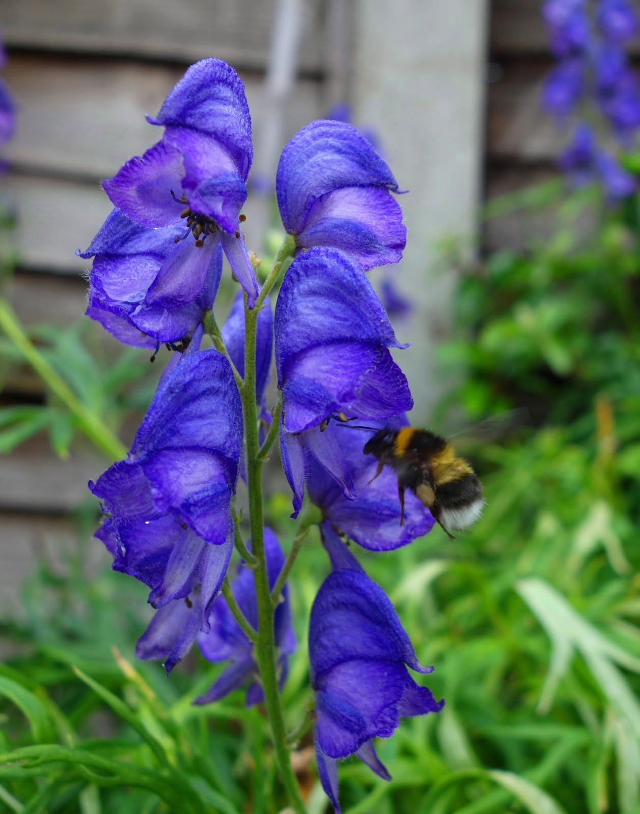 urban pollinators  pollinator