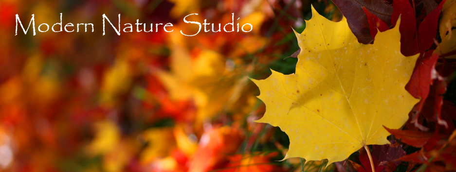 Modern Nature Studio: My Creative World