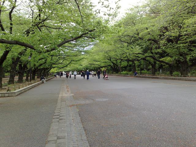 Sakura Trees in Ueno Park, Tokyo