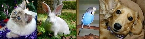 Vetshop VN: Quy trình kỹ thuật và sản phẩm chăn nuôi thú y cho mọi người
