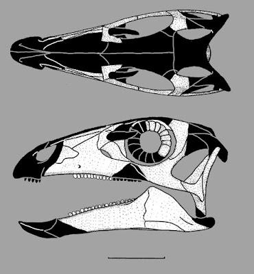 Parksosaurus skull