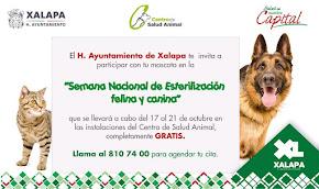 EN XALAPA...Del 17 al 21 de octubre, invitan a la Semana de Esterilización Canina y Felina