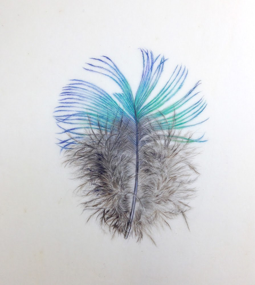 Watercolour on vellum of a peacock feather