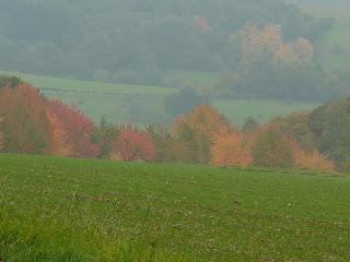 Herbst - Ätherische Öle als Lichtbringer