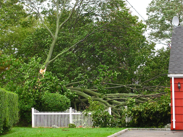 Hurricane Irene-in-Farmingdale-NY-on-Long-Island-Summer-2011