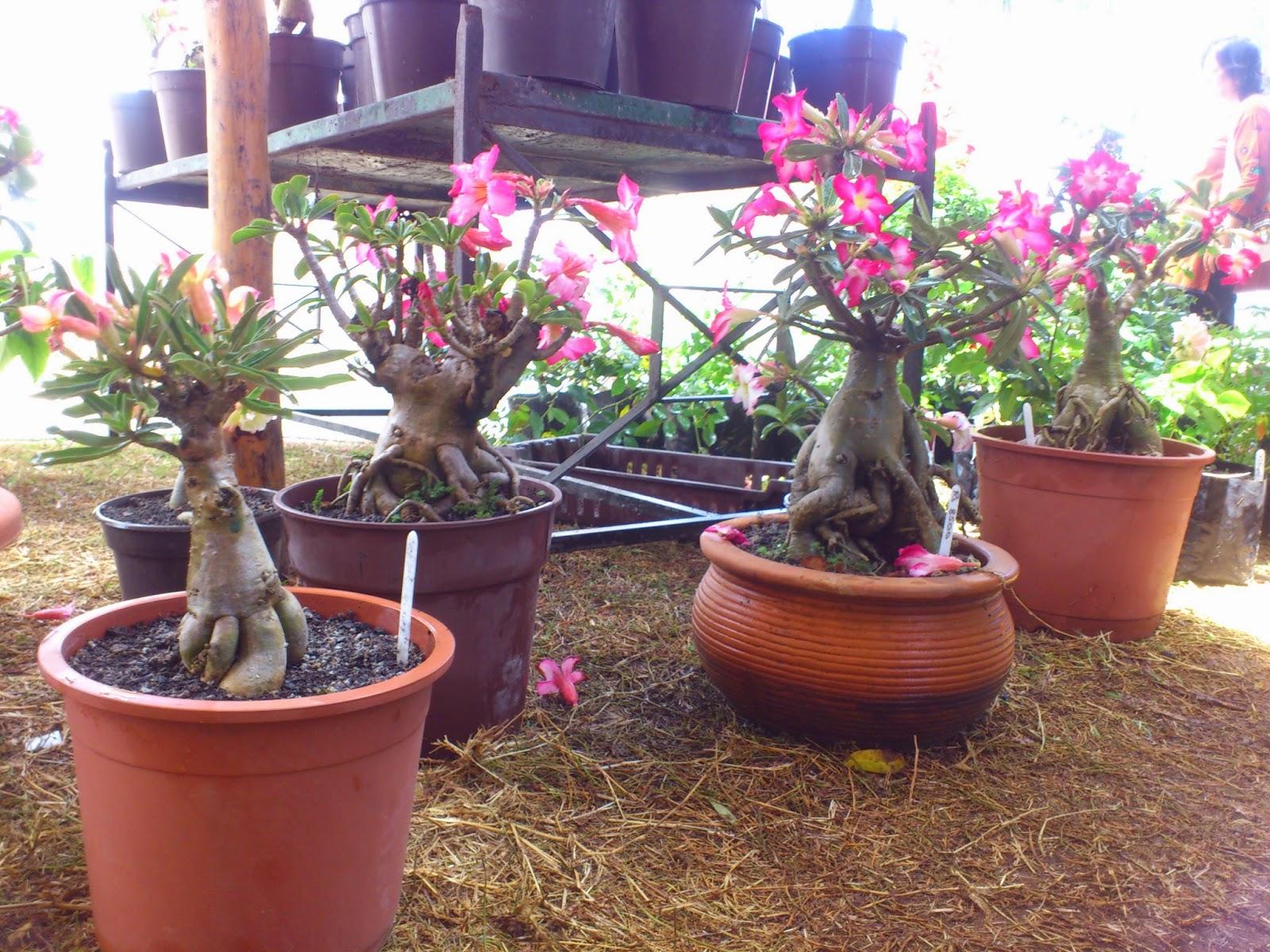 Bonsai Mauritius Bonsai Salon De La Maison Et Du Jardin 2014