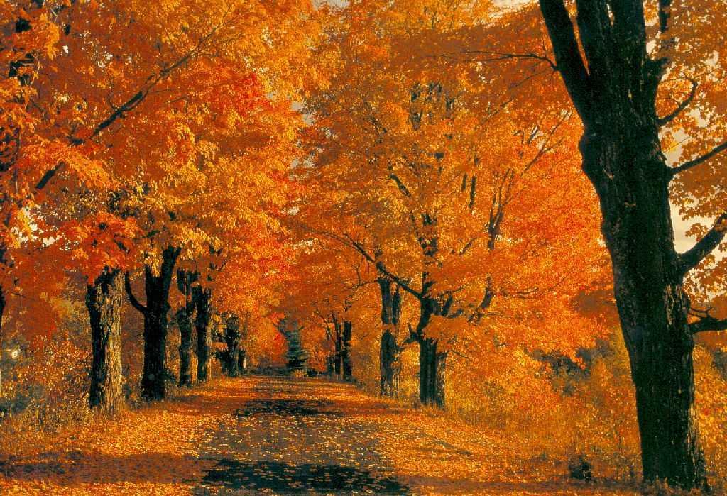 Risultati immagini per autunno al cohousing