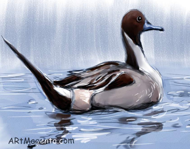 Pintail sketch painting. Bird art drawing by illustrator Artmagenta.