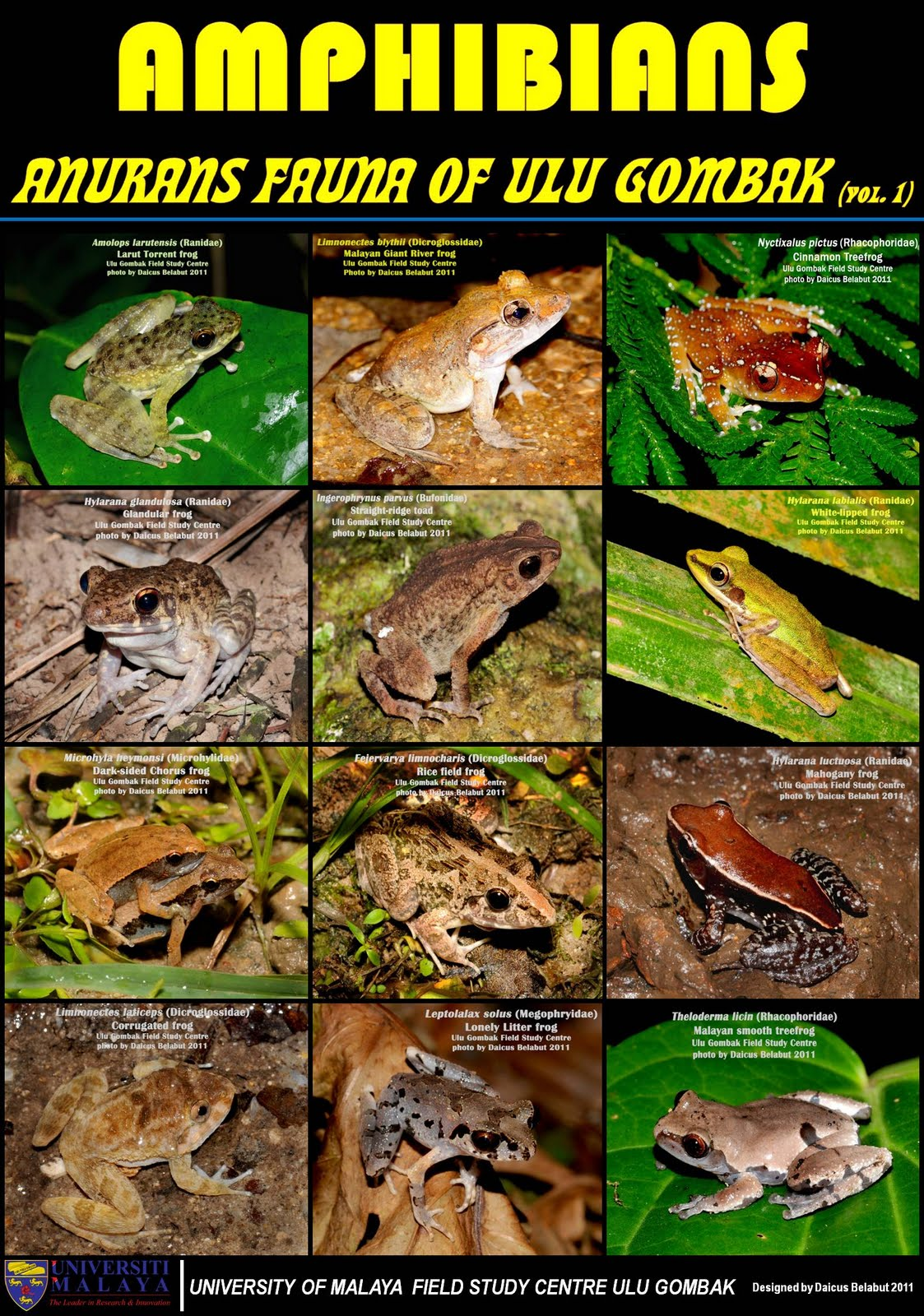 Image Gallery list of amphibians names