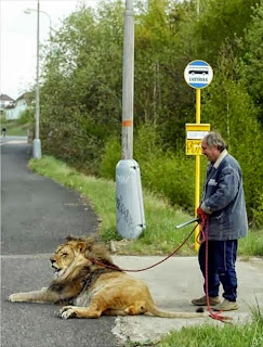funny picture: grandfather with lion