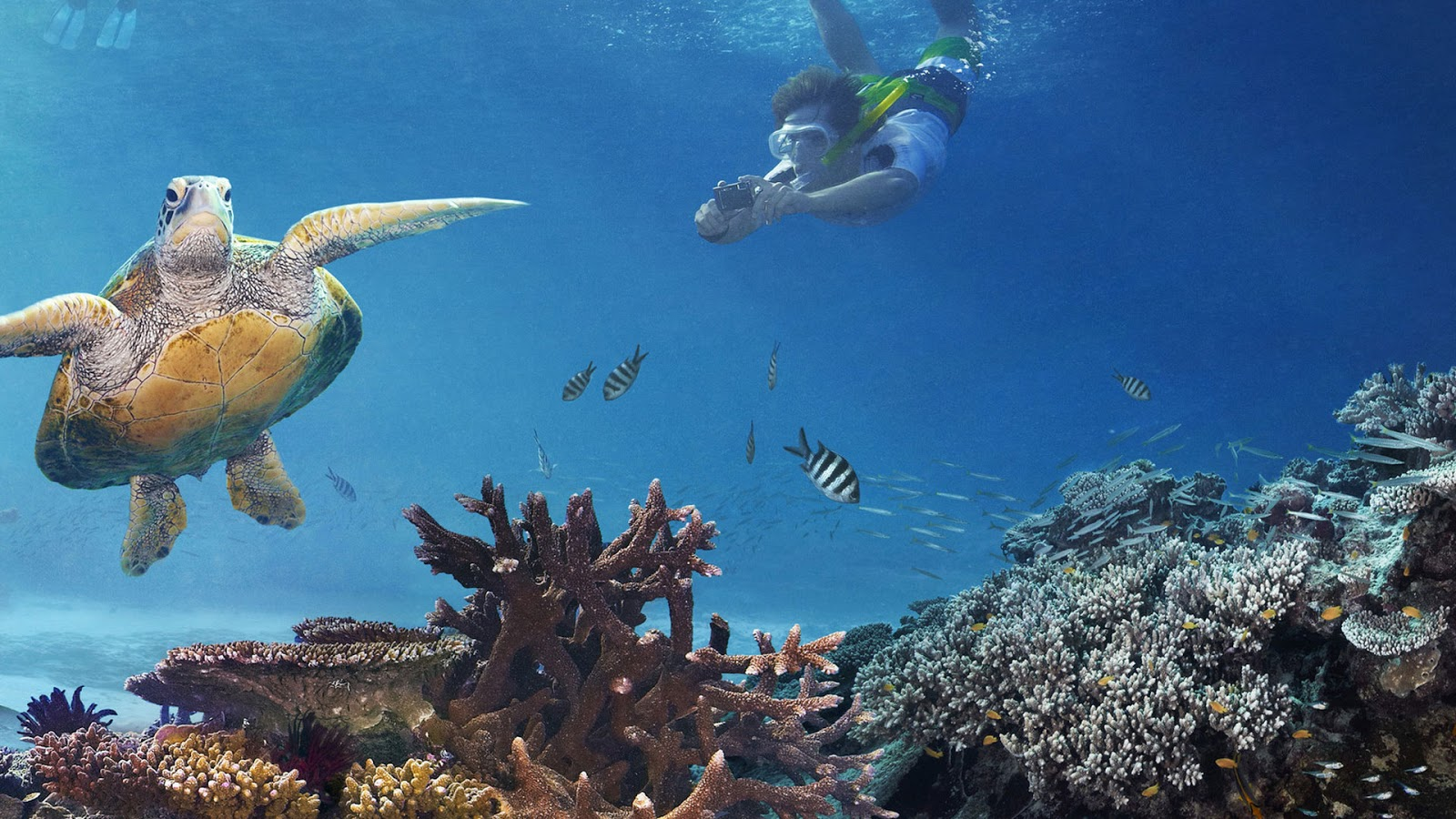 World visits natural wonders great barrier reef for Great pictures of the world