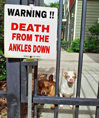 death from the ankles down, funny dog, guard dog, dog humor, dog meme