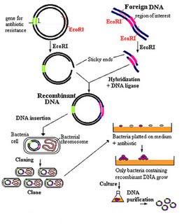 Bioteknologi Tradisional (Konvensional) dan Modern