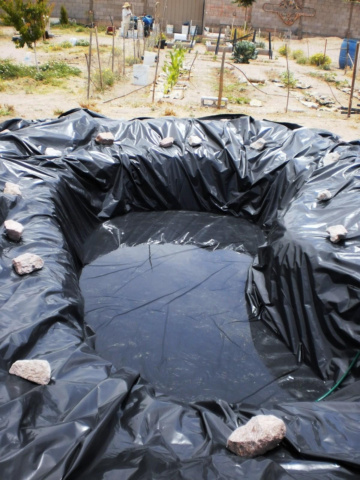 Las golondrinas margaritas camalu el estanque de los - Como decorar un estanque ...