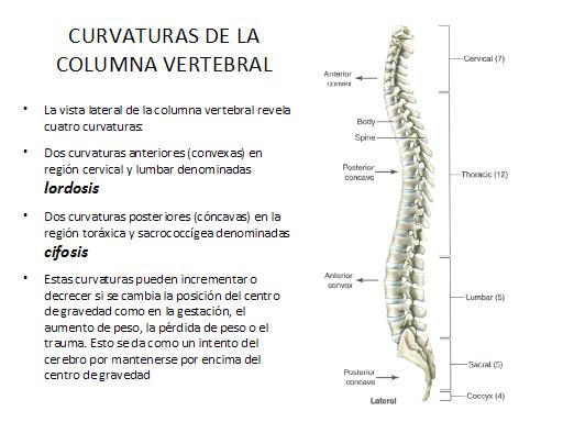 Que curar la escoliosis de la columna vertebral a los adolescentes el tratamiento