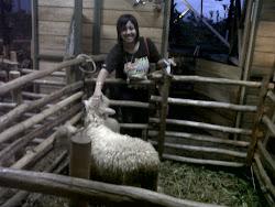 Penjualan Domba 23 Jan 2012
