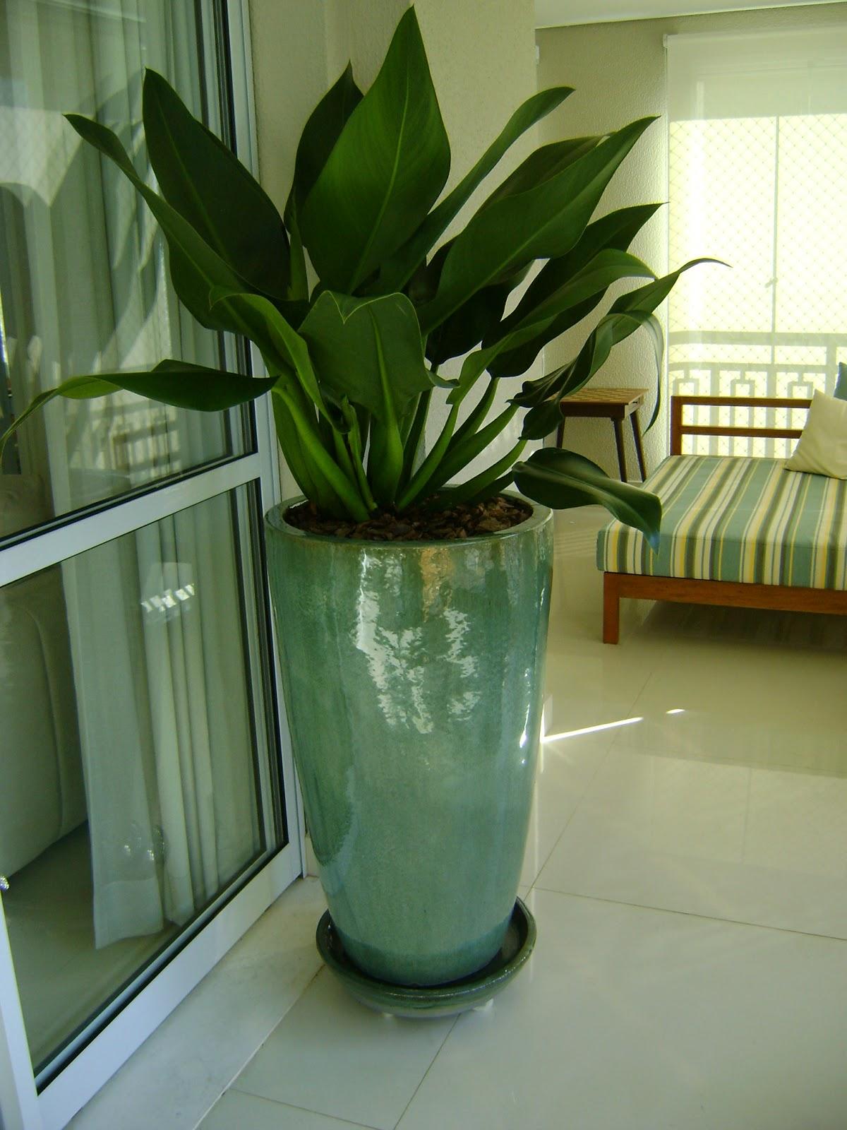 flores de jardim resistente ao sol:pacová não gosta de sol diretamente é ideal para interiores ou