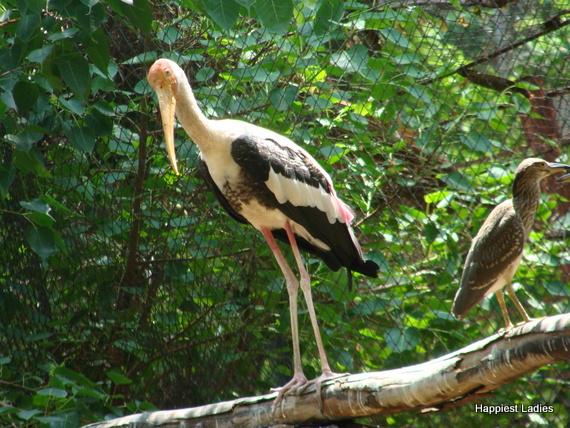birds at mysore zoo