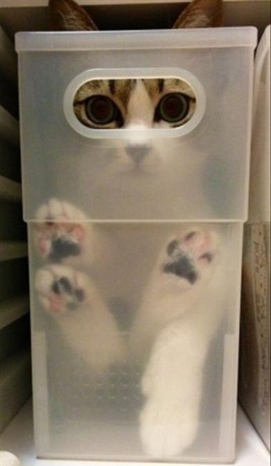 Pets Playing Hide-and-seek