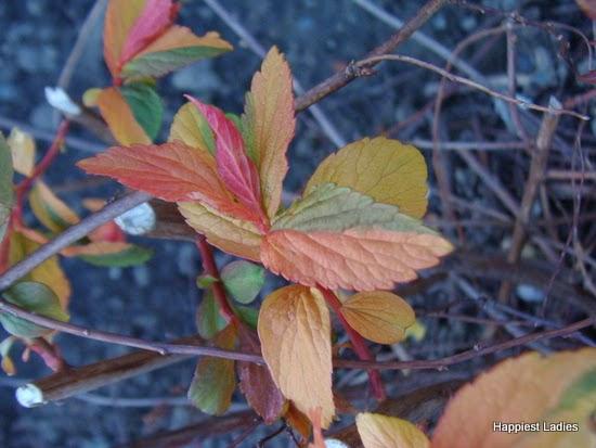 spring leaves 6