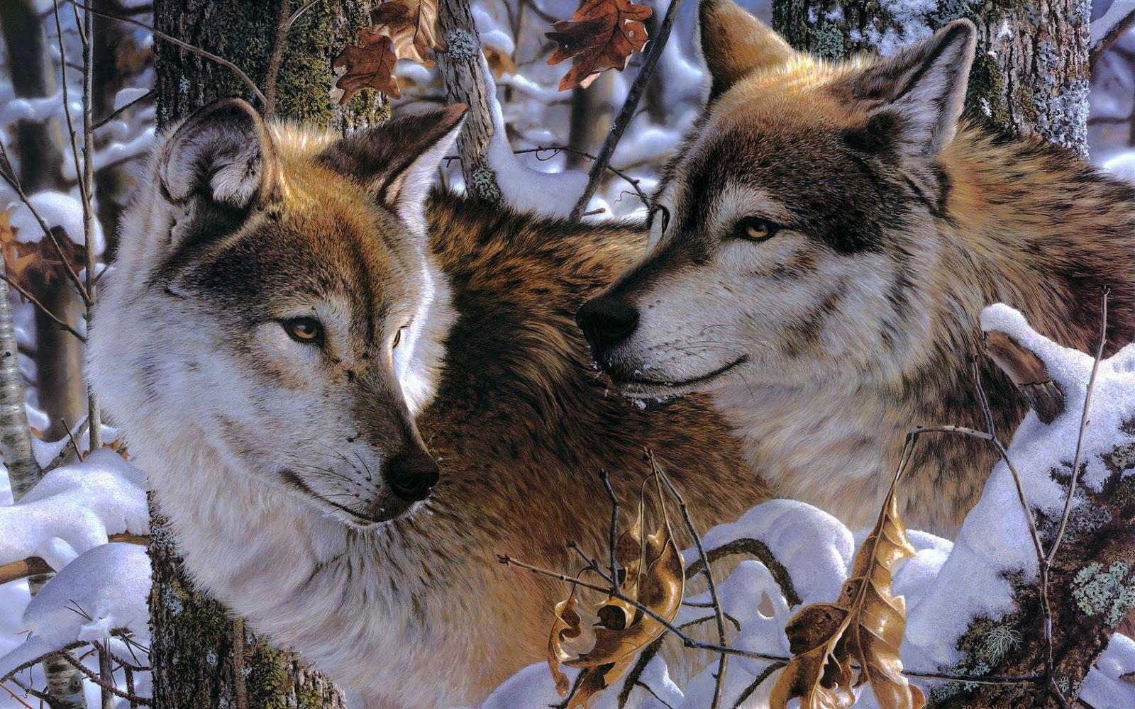 http://4.bp.blogspot.com/-ec1quWwbU34/UImvBGHgJlI/AAAAAAAAH7I/zlwag7fMUeE/s1600/portretfoto-van-twee-wolven-hd-wolf-wallpaper.jpg