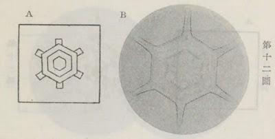 『雪華図説』の研究 模写図と顕微鏡写真と比較 第十二図