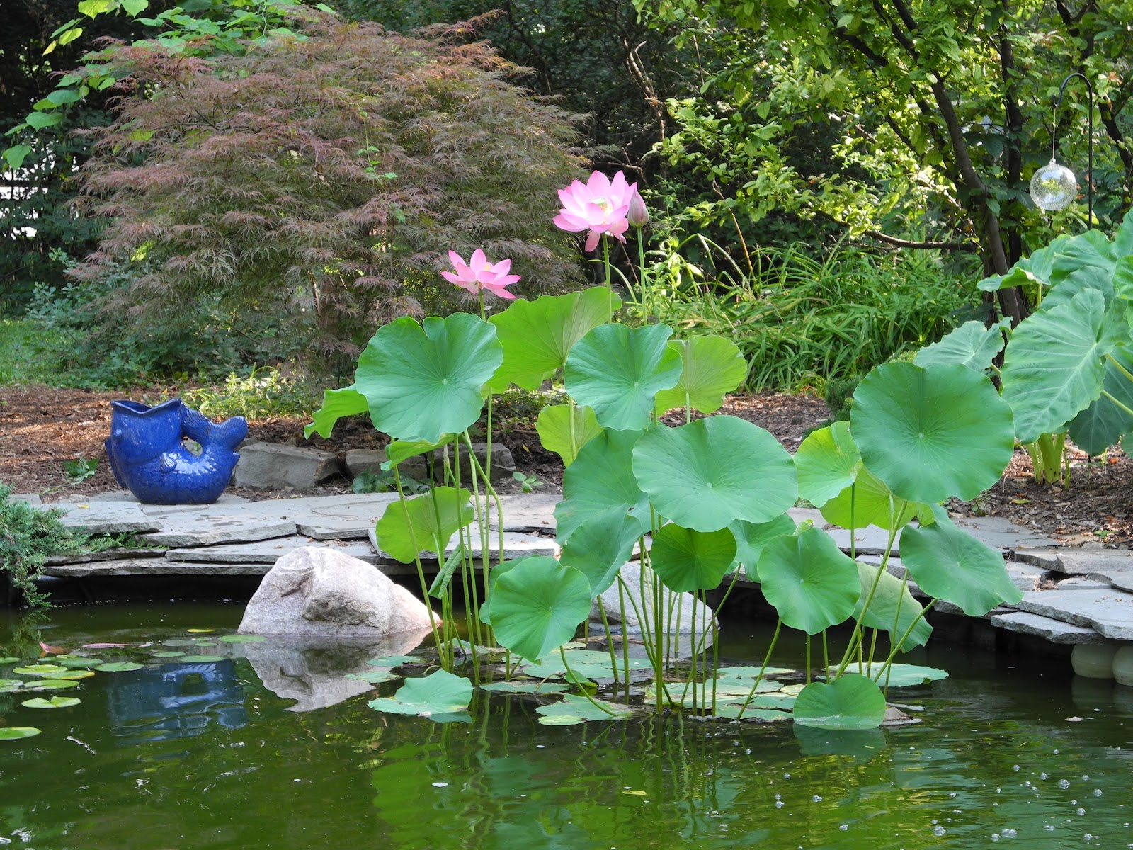 The phytophactor friday fabulous flower lotus not everything suffers from the heat some plants like it especially when they have their roots firmly planted in a aquatic habitat the phactor also knows mightylinksfo