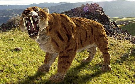 Facts of Sabertooth Tiger http://rdissanayake.blogspot.com/2011/07/interesting-facts-about-cats-ii.html