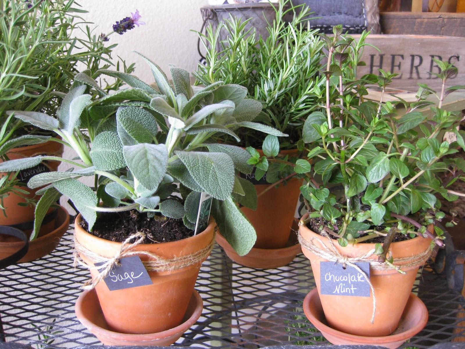 Potted Herbs Bella Vita livebellavita