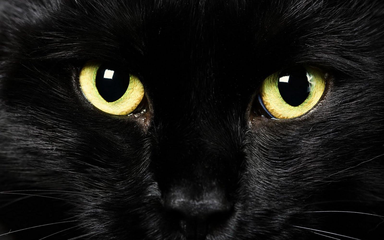 http://4.bp.blogspot.com/-ecl_m6loUPM/TjRZXEiNPaI/AAAAAAAAAE8/IPYssh1tldw/s1600/Wallpaper-cat-eyes-face-desktop-wallpaper-25601600.jpg