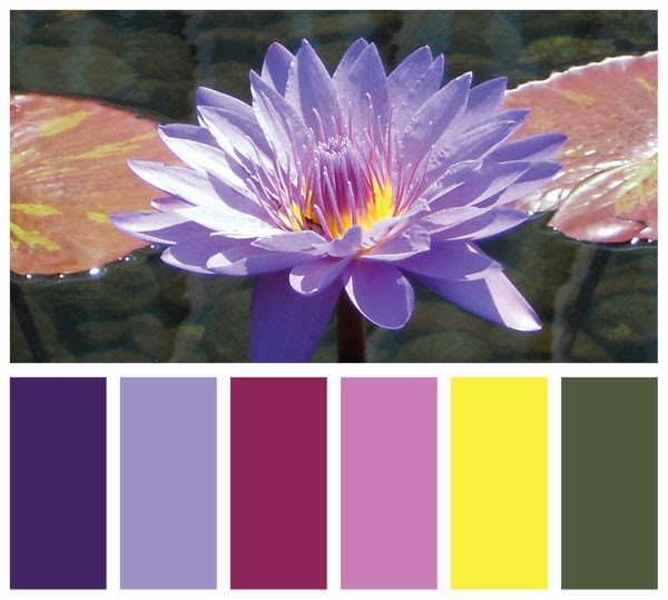 Color Swatch Palette made from a photo of a water lily