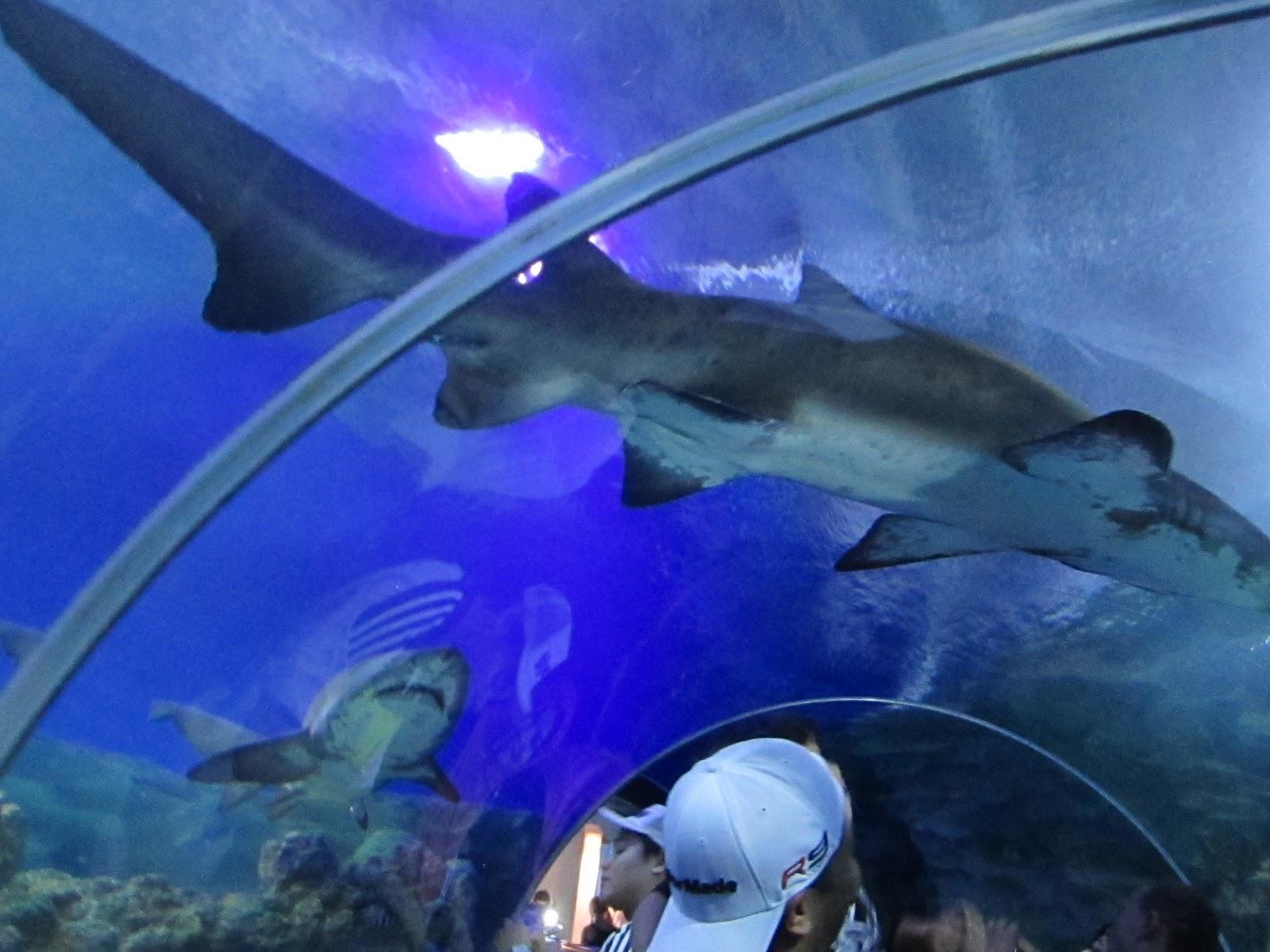 aquaria klcc sharks octopus aquaria klcc viewing area you may