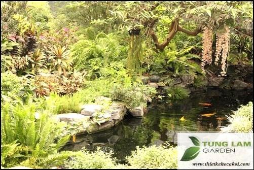 Cải tạo hồ Koi, thiết kế hồ cá koi đẹp, thi công hồ cá Koi trọn gói, bán cá koi Nhật