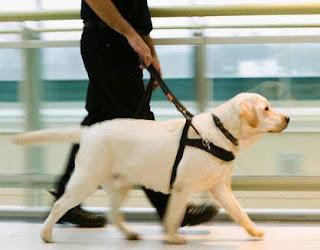 Cachorros serão treinados pelo governo federal para deficientes visuais