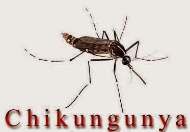 Cara Mengobati Chikungunya