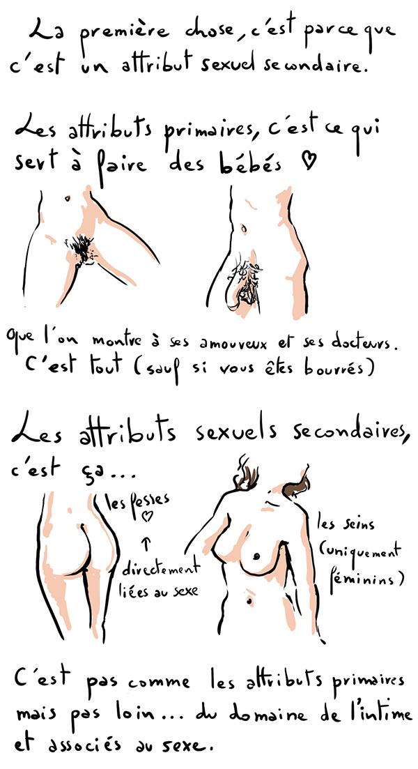 attributs sexuels primaires et secondaires