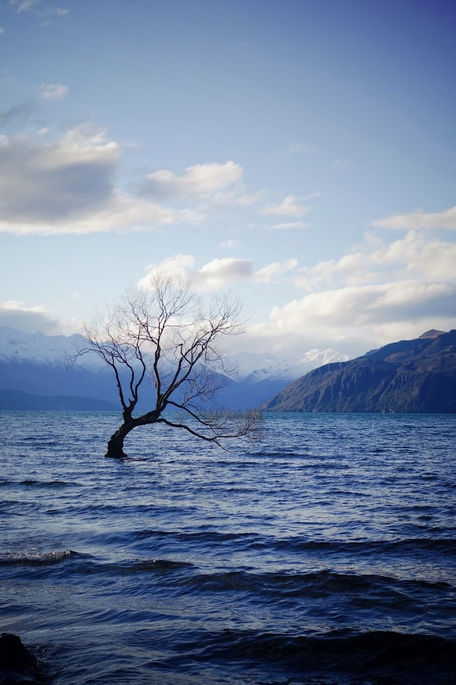 Lone Tree Wanaka Lake New Zealand