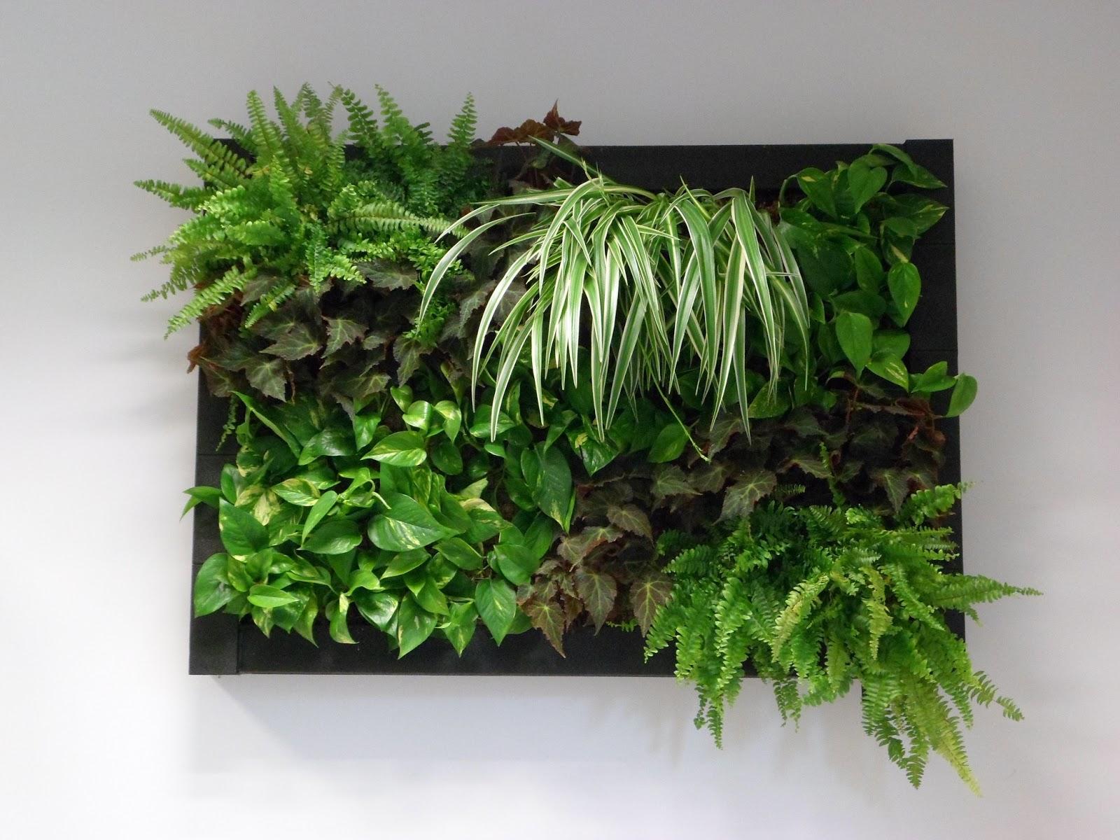 Savia ingenier a y medio ambiente jardines verticales for Plantaciones verticales