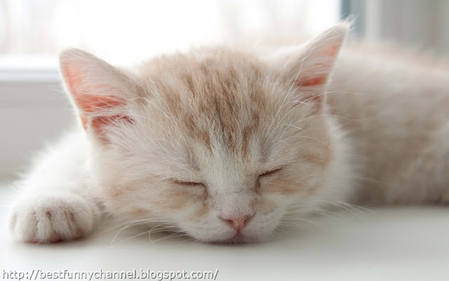 Cute sleeping kitten.