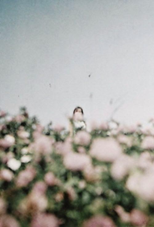 summer blur flowers whimsical