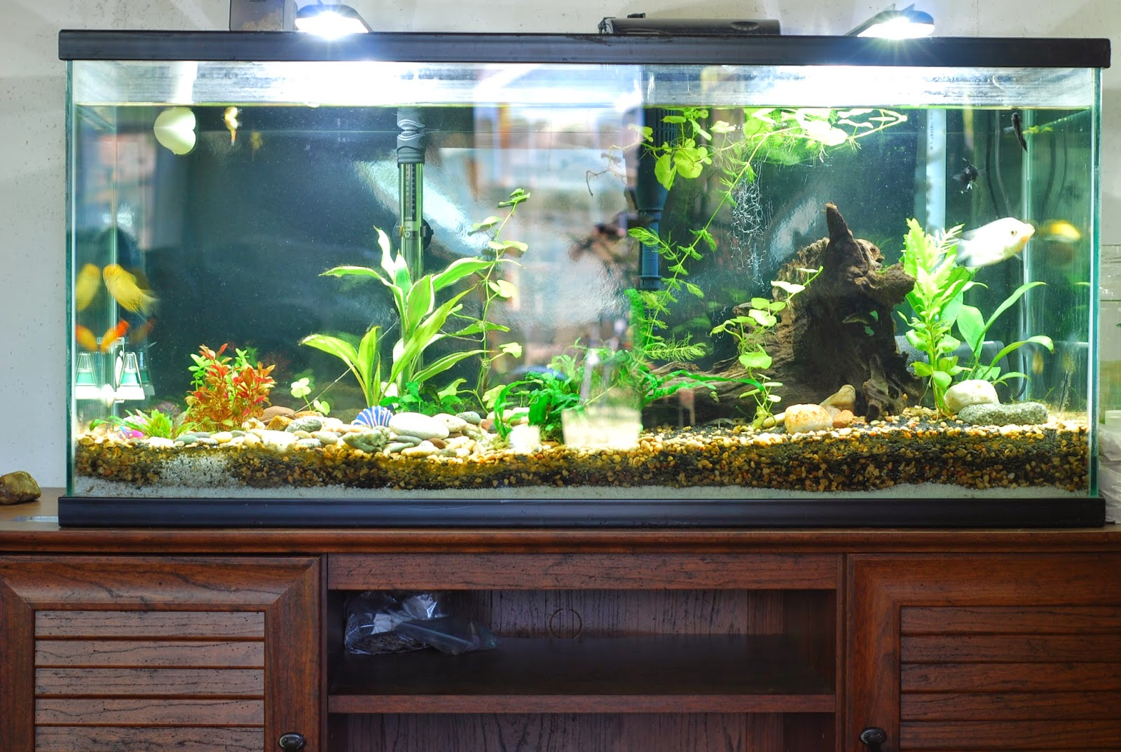 Fish in new aquarium - How To Start A New Aquarium Freshwater